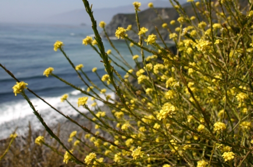 stopped to smell the PCH flowers